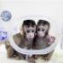 Kinezi klonirali majmune a svi se pitaju šta je sljedeće (Video)!